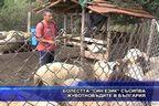 """Болестта """"син език"""" съсипва животновъдите в България"""