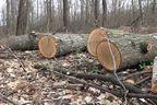 Уволнени служители: ДПС диктува съкращения в горско стопанство