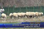"""Затихва болестта """"син език"""" в Шуменска област"""