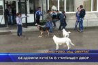 Бездомни кучета в училищен двор