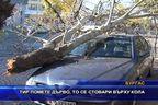 ТИР помете дърво, то се стовари върху кола