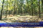 Собственици на гори търпят огромни загуби