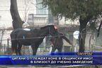 Цигани отглеждат коне в общински имот в близост до учебно заведение