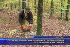 Тонове дървесина се изнасят всяка година от Странджа към Турция