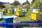 Изследват се причините за смъртността при пчелите