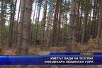 Кметът вади на тезгяха 4 000 декара общинска гора