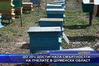 До 20% достигнала смъртността на пчелите в Шуменска област