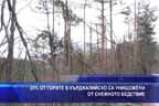 20% от горите в кърджалийско са унищожени от снежното бедствие