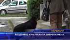 Бездомно куче нахапа зверски жена