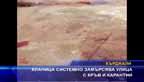 Кланица системно замърсява улица с кръв и карантии
