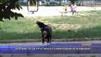 Заплаха ли са кучетата без намордник или каишка?