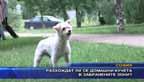 Разхождат ли се домашни кучета в забранените зони?
