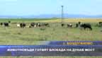 Животновъди готвят блокада на Дунав мост