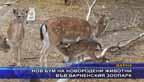Нов бум на новородени животни във Варненския зоопарк