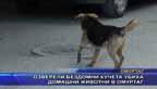Озверели бездомни кучета убиха домашни животни в Омуртаг