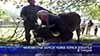 Неизвестна зараза убива хора и добитък в Турция