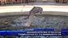 Делфинариума отбеляза годишнина от създаването си