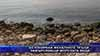 Бетонираха фекалните тръби, замърсяващи морската вода