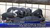 Рекорден брой новородени животни във Варненския зоопарк