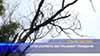 Сухи дървета застрашават граждани