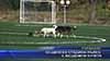 Общински стадион пълен с бездомни кучета