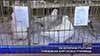 Екзотични гълъби превзеха бургаско училище