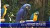 Уникалният папагал Рио е на гости в града под тепетата