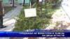 Продажба на живи елхи в помощ на деца аутисти