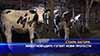 Животновъдите готвят нови протести