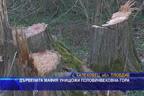 Дървената мафия унищожи половинвековна гора