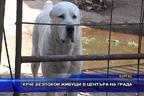 Куче безпокои живеещи в центъра на града