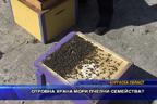 Отровна храна мори пчелни семейства?