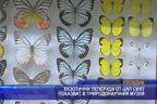 Екзотични пеперуди от цял свят показват в природонаучния музей