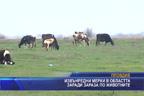 Извънредни мерки в областта заради зараза по животните