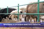 Умъртвиха 35 преживни животни в областта