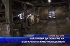 Кой трябва да помогне на българското животновъдство?!