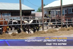 Нодуларният дерматит порази още три ферми