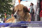 Бездомните кучета - неразрешимият проблем на Кърджали