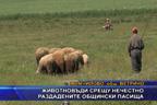 Животновъди срещу нечестно раздадените общински пасища