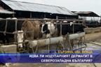 Идва ли нодуларният дерматит в Северозападна България?