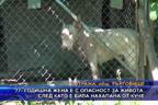 77 годишна жена е с опасност за живота, след като е била нахапана от куче