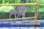Над 10 бебета се родиха в зоопарка