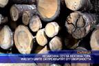 Незаконна сеч на вековна гора, институциите си прехвърлят отговорността