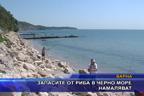 Запасите от риба в Черно море намаляват