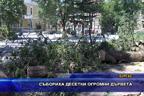 Събориха десетки огромни дървета