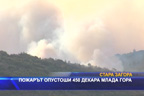 Пожарът опустоши 450 декара млада гора