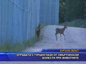 Оградата с Турция пази от смъртоносни болести при животните
