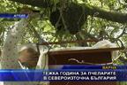 Тежка година за пчеларите в Североизточна България