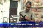 Блестящ ибис беше спасен в Сливен