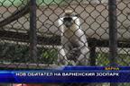 Нов обитател на варненския зоопарк